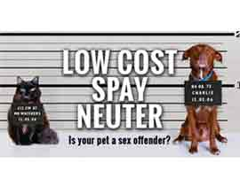 Low Cost Spay Neuter in Roswell New Mexico